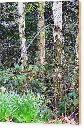 Birch Trees In London Wood Print by Mindy Newman