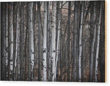 Birches Wood Print by Diane Dugas
