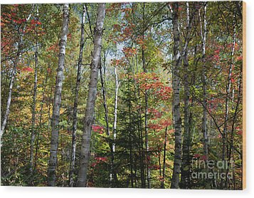 Wood Print featuring the photograph Birches In Fall Forest by Elena Elisseeva