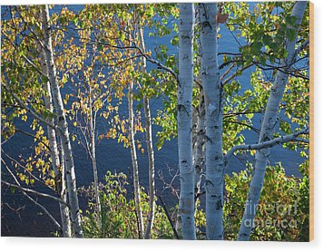 Wood Print featuring the photograph Birches On Lake Shore by Elena Elisseeva