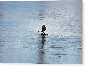 Wood Print featuring the photograph Bird 7986 by Teresa Blanton