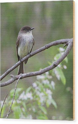 Bird - Eastern Phoebe Wood Print by Ron Grafe
