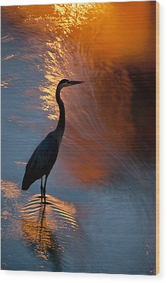 Bird Fishing At Sundown Wood Print by Williams-Cairns Photography LLC