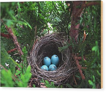 Bird Home Wood Print by Shirley Sirois