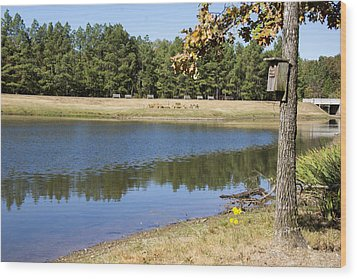 Bird House Lake Wood Print