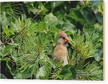 Bird In A Tree 2 Wood Print