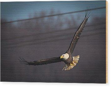 Bird In Flight  Wood Print