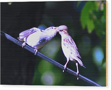 Bird Kiss Wood Print by Bill Cannon