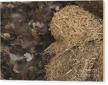 Bird Nest And Feathers Wood Print by Jason Rosette