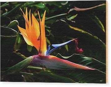 Bird Of Paradise Flower Wood Print by Brian Harig