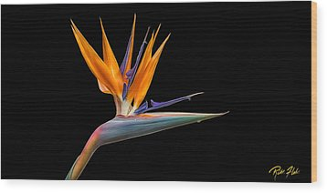 Bird Of Paradise Flower On Black Wood Print by Rikk Flohr