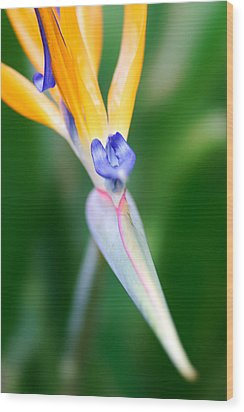 Wood Print featuring the photograph Bird Of Paradise by Francesco Emanuele Carucci