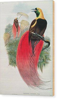 Bird Of Paradise Wood Print by John Gould