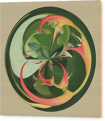 Bird Of Paradise Orb Wood Print by Bill Barber