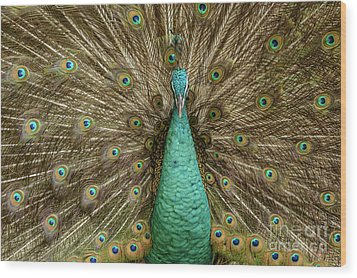 Wood Print featuring the photograph Peacock by Werner Padarin