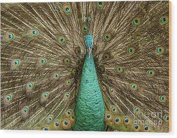 Peacock Wood Print by Werner Padarin