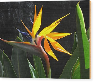 Wood Print featuring the photograph Bird Of Paradise by Yolanda Koh