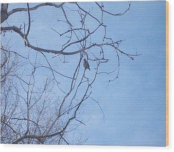 Wood Print featuring the photograph Bird On A Limb by Jewel Hengen