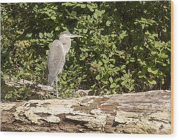 Bird On A Log Wood Print
