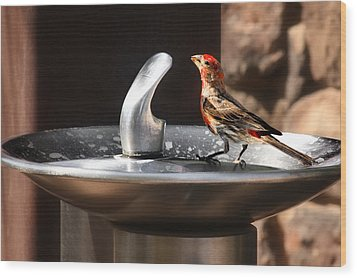Bird Spa Wood Print by Christine Till