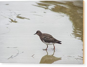 Wood Print featuring the photograph Bird Walking On Beach by Mariola Bitner