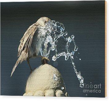 Birdbath Wood Print by Jan Piller