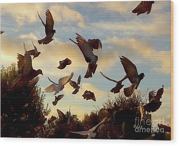Birds And Fun At Butler Park Austin - Birds 1 Wood Print