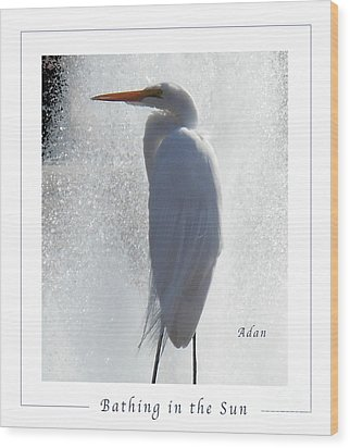 Birds And Fun At Butler Park Austin - Birds 2 Macro Poster Wood Print