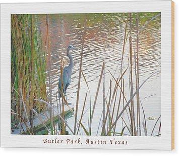 Birds And Fun At Butler Park Austin - Birds 4 Poster Greeting Card Wood Print by Felipe Adan Lerma