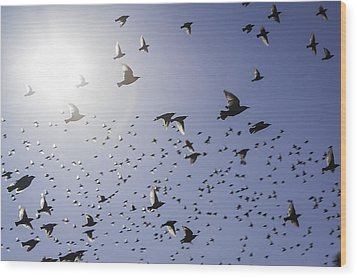 Wood Print featuring the photograph Birds by Lynn Geoffroy