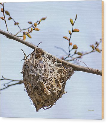 Wood Print featuring the photograph Birds Nest by Christina Rollo