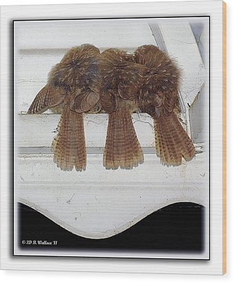Birds Of A Feather Wood Print by Brian Wallace