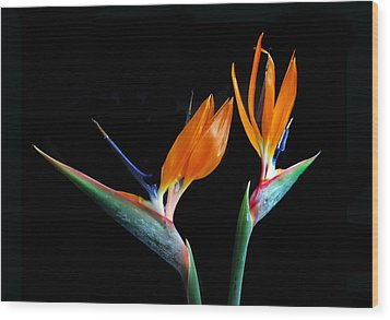 Birds Of Paradise Wood Print by Terence Davis