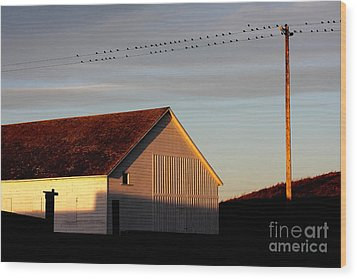 Birds On A Wire Wood Print by Wingsdomain Art and Photography