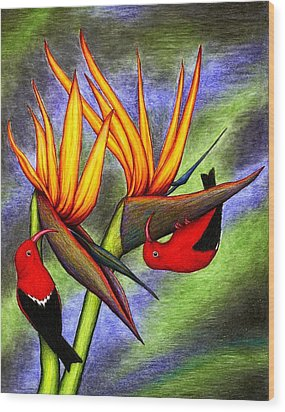 Birds On Birds Wood Print by Don McMahon