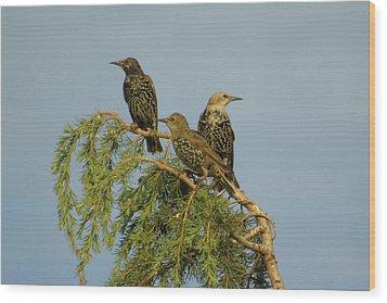Birds-on-watch Wood Print by Gordon Auld