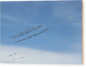 Birds On Wires Wood Print