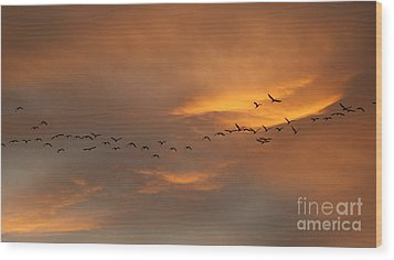 Birds Over San Miguel De Allende Wood Print by John  Kolenberg