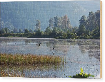 Birds Paradise Wood Print by Victor K
