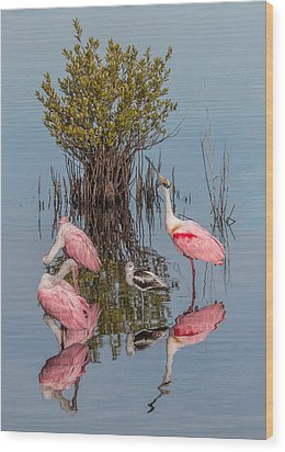 Birds, Reflections, And Mangrove Bush Wood Print