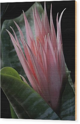 Birth Of A Bromeliad Wood Print