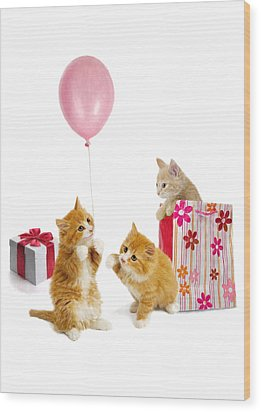 Birthday Kitties Wood Print by Bob Nolin