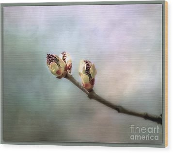 Birthing Of A Lilac Wood Print by Brenda Bostic