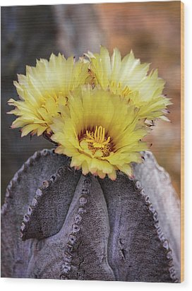 Wood Print featuring the photograph Bishop's Cap Cactus  by Saija Lehtonen