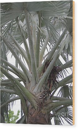 Bismark Palm Wood Print by Dodie Ulery