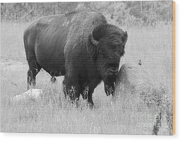 Bison And Buffalo Wood Print by Mary Mikawoz