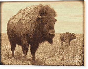 Bison And Calf Wood Print