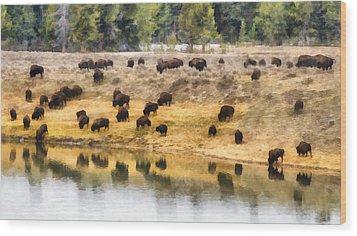 Bison At Indian Pond Wood Print