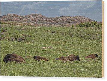 Bison At Rest Wood Print