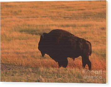 Wood Print featuring the photograph Bison At Sunset by Edward R Wisell